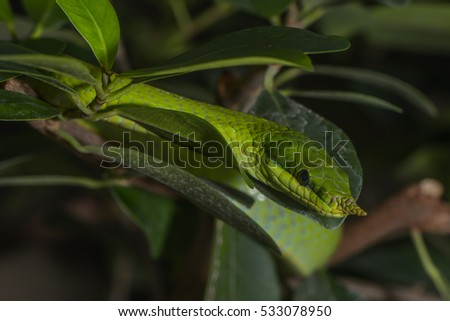 a green snake in a copse