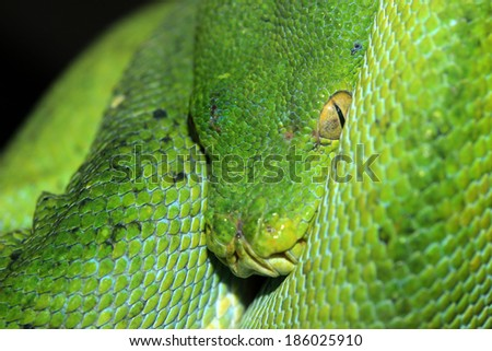 a green snake on a branch  - stock photo