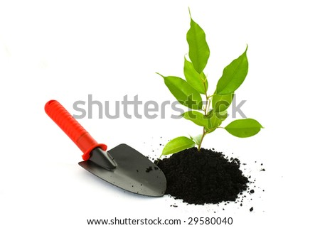 A green transplant growing from the soil and a small spade beside on a light background