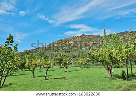 A green valley with trees of sicilian hinterland at the sunny day