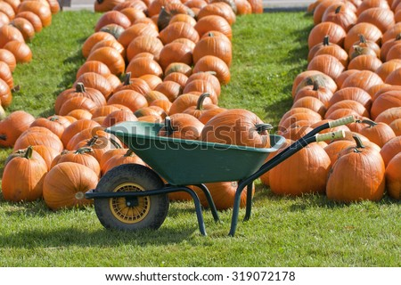 A green wheelbarrow is used to transport heavy pumpkins at the farmer's market. These gourds are lined up on the ground in the background. - stock photo
