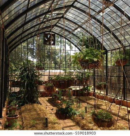 a greenhouse interior