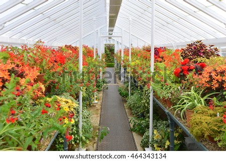 A Greenhouse interior at an  English country garden in Summertime.