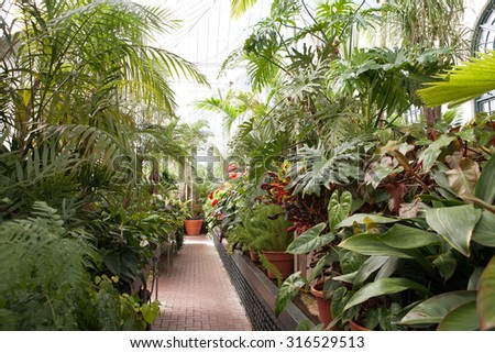 a greenhouse that holds different types of plants, interior