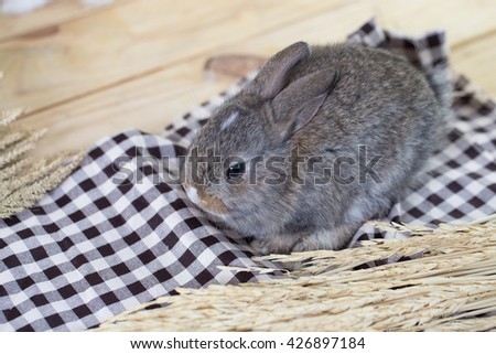 A grey adorable rabbit on cloth with wheatgrass on wood floor - stock photo