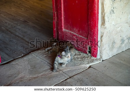 A grey tabby cat lounges in the doorway of an historic building.  The original plank wood floor and red door create an interesting backdrop.