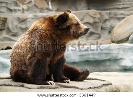 a grizzly bear sitting on a rock formation at the zoo