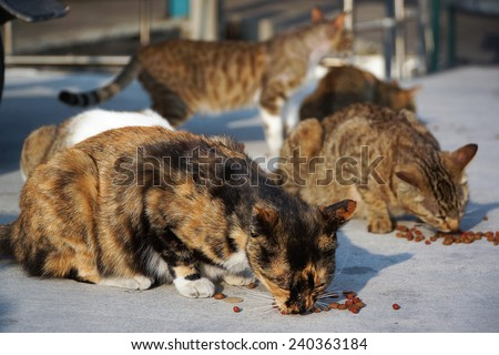 A Group of Alley Cats Happily Enjoy Cat Food Feed by Tourists, in A Fishing Village Near The Kaohsiung City. - stock photo