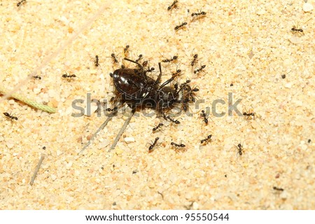 A group of ants