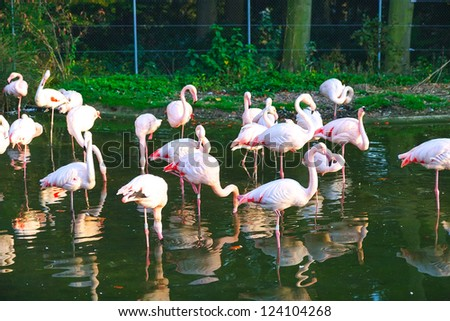 A Group of Beautiful Flamingo standing in the water in a zoo, Bern, Switzerland - stock photo
