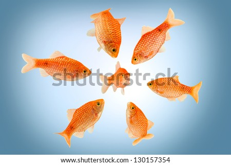 a group of big fish surrounding a small fish - stock photo