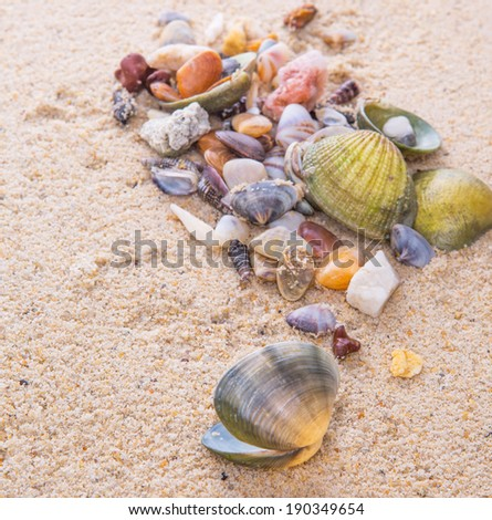 A group of colorful and different variety of clams and sea shells on a beach sand