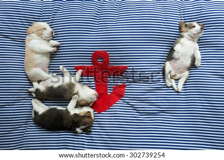 A group of cutie puppies beagle take a nap at the afternoon time with the unique comfy pose - stock photo