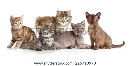 A group of different kitten - stock photo