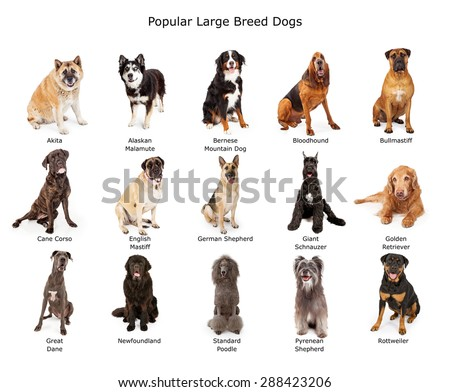 Fifteen Dogs Names