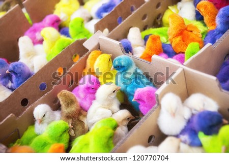 A group of funny, colorful easter chicks. - stock photo
