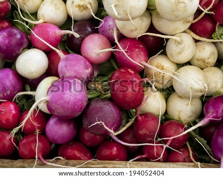 A group of just harvested radishes at local farm market.