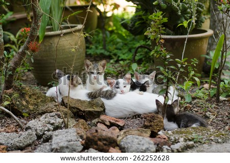 A group of kitten gather around with their mother to have precious family time together - stock photo