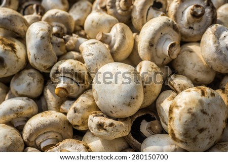 A group of mushrooms  - stock photo