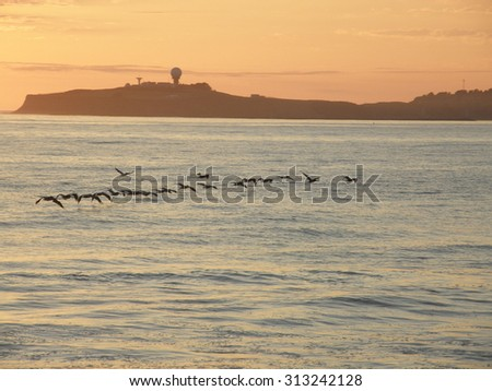 A group of pelicans flying in Half Moon Bay at sunset. - stock photo