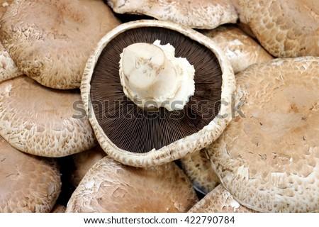 a group of portabella mushroom - stock photo