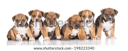 a group of puppies - stock photo