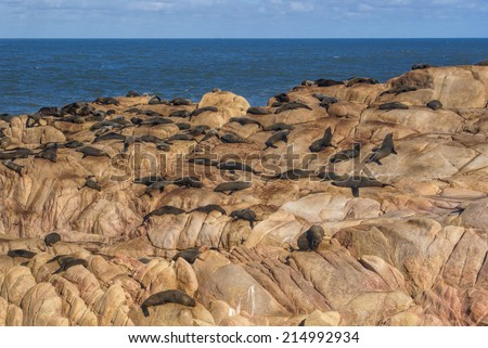 A group of sea lions basking in sunlight on rocks in Cabo Polonio, Uruguay - stock photo
