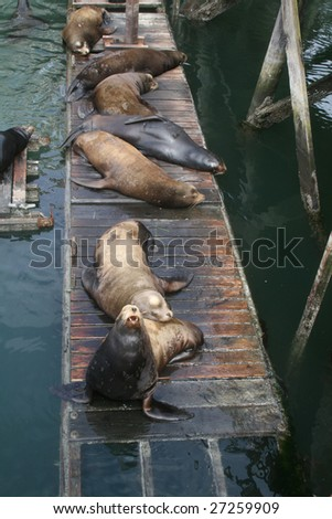 A group of sea lions dozing on a small pier.