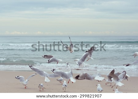 A group of seagulls in motion
