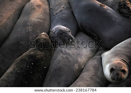 A group of seals bunched together for warmth. - stock photo