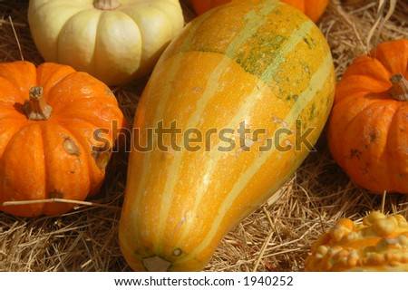 A group of Squash
