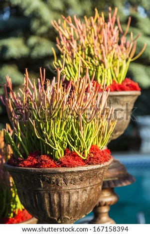 A group of succulent plants in a pot - stock photo