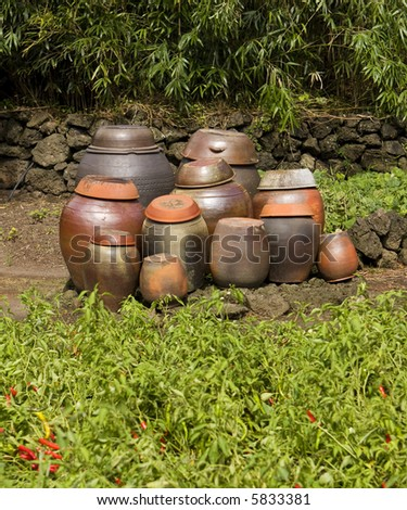 A group of traditional clay pots are waiting and ready to be filled with kimchi to age. The red hot chili peppers growing in the foreground are a key ingredient. - stock photo