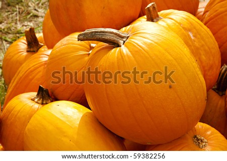 A group of two types of Halloween fall autumn pumpkins on a green grass background. - stock photo