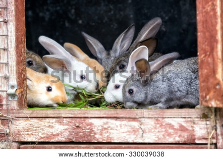 A group of young rabbits in the hutch - stock photo