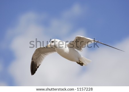 A gull eyes the photographer as he's captured in flight.