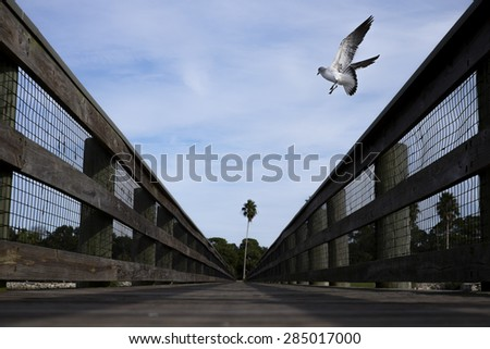 A gull takes flight from a dock at Weaver Park in Dunedin, Florida.