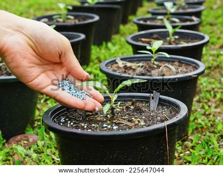 a hand giving fertilizer to a young plant in a plastic pot / planting tree - stock photo