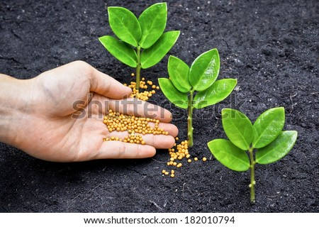 a hand giving fertilizer to young plants / planting trees / fertilizing young trees - stock photo