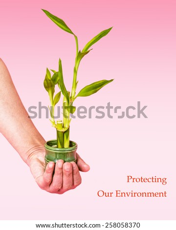 A hand holding a mini plant - lucky bamboo, dracaena braunii, a belief inside houses and business places to bring happiness, prosperity. Concept of protecting our environment. Instagram filtered look. - stock photo