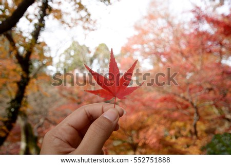 A Hand Holding a Red Maple Leaf