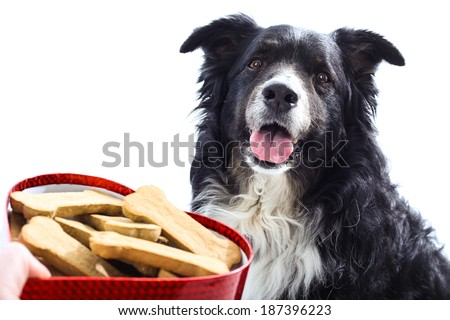A hand holds a heart shaped box of treats outstretched towards a cute happy dog.  isolated on white.