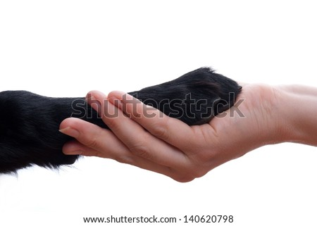 a handshake between a dog and a person, isolated - stock photo