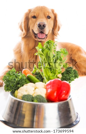 A handsome golden retriever dog laying down next to a bowl of fresh vegetables. - stock photo