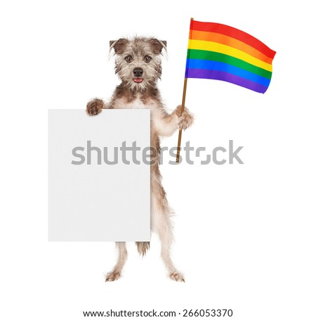A happy and smiling dog standing up and holding a blank white sign and a rainbow color flag symbolizing gay rights  - stock photo