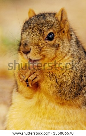 A Happy Brown Squirrel - stock photo