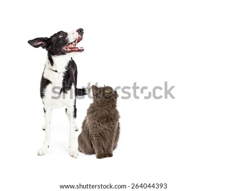 A happy crossbreed dog and a pretty gray color cat together looking up and to the side into blank copy space