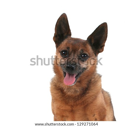 a happy dog with his tongue out - stock photo
