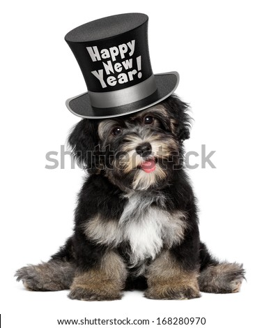 A happy smiling havanese puppy dog is wearing a black Happy New Year top hat, isolated on white background - stock photo