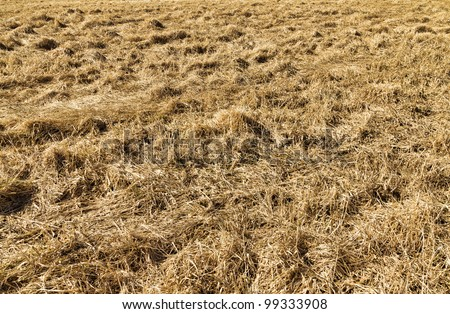 A harvested hay field in the springtime. - stock photo